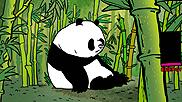projekty-pandy